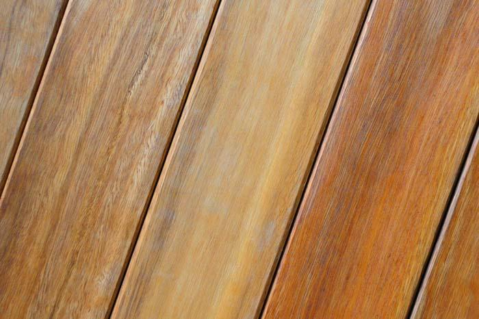Spotted Gum Image